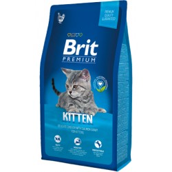 Brit Blue Kitten